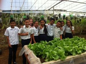 学校菜園における野菜栽培